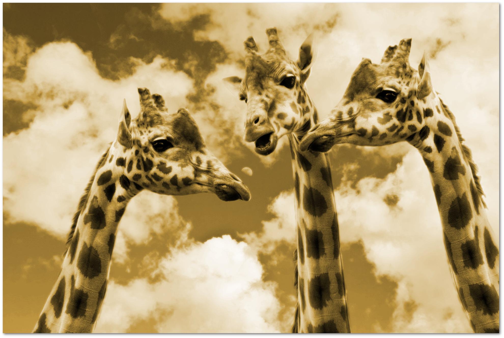 giraffen-dialog